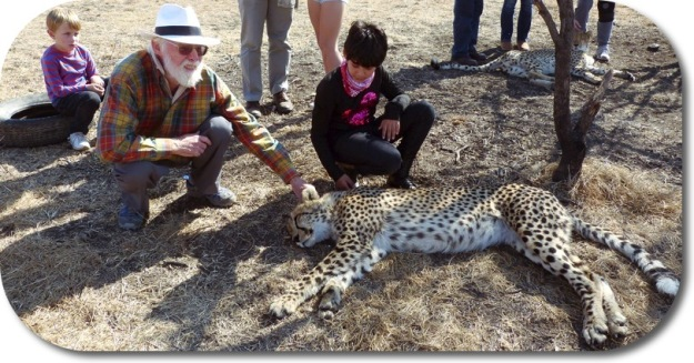 Getting to know the cheetahs with my granddaughter at Nambiti, S Africa
